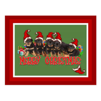 Carte Postale Chiots de rottweiler de Joyeux Noël