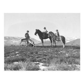 Carte Postale Choyer des antilopes