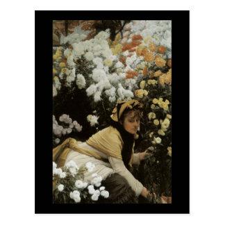 Carte Postale Chrysanthèmes de Tissot