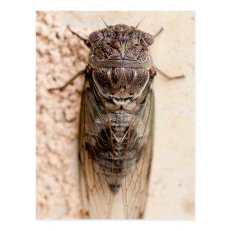 Carte Postale cicada