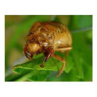 Carte Postale cicada1