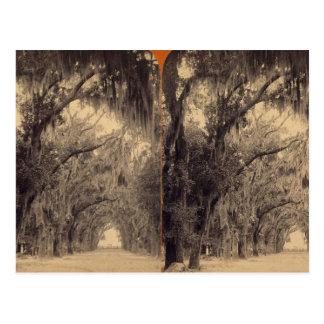Carte Postale Cimetière de Bonaventure, la savane, GA C. 1887