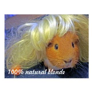 Carte Postale Cobaye avec la perruque blonde