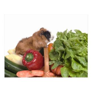 Carte Postale cobaye dans un panier des légumes