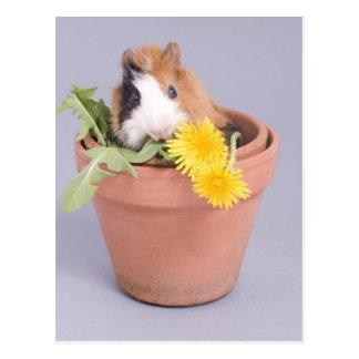 Carte Postale cobaye dans un pot de fleurs