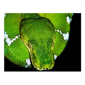 Carte Postale Cobra