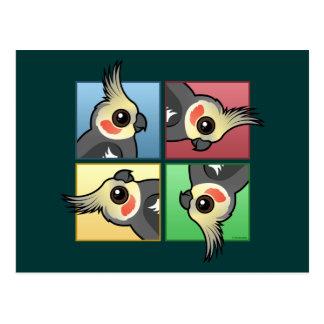 Carte Postale Cockatiel de quatre couleurs