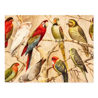 Carte Postale Cockatiel vintage de perruche de Conure de