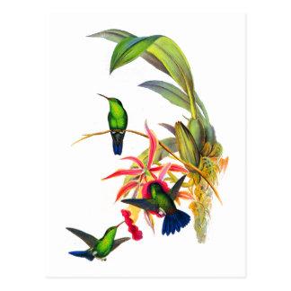 Carte Postale Colibris de John Gould avec les orchidées roses