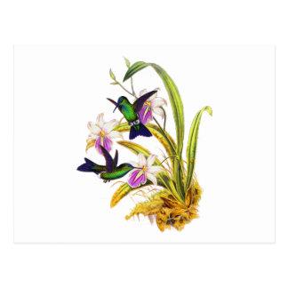 Carte Postale Colibris et orchidées pourpres