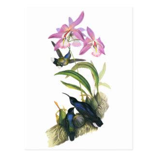 Carte Postale Colibris et orchidées roses