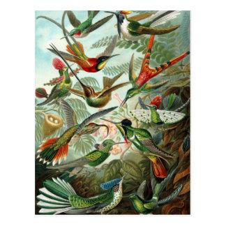Carte Postale Colibris par Ernst Haeckel, arbres vintages