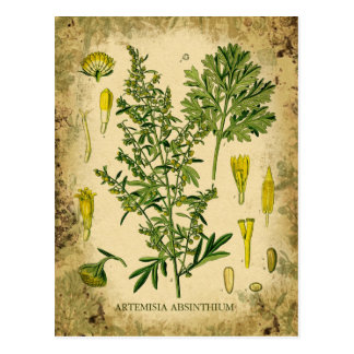 Carte Postale Collage botanique d'absinthe