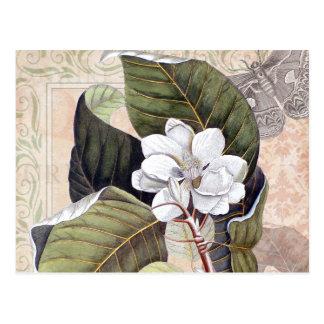 Carte Postale Collage botanique vintage avec la magnolia