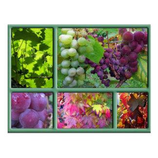 Carte Postale Collage de récolte de raisin d'automne