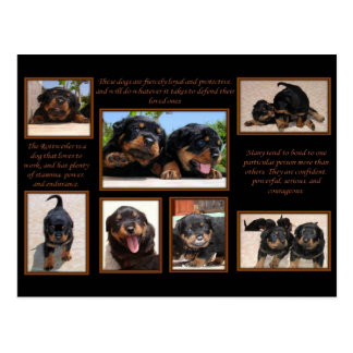 Carte Postale Collage de rottweiler avec le texte