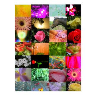 Carte Postale Collage de variété