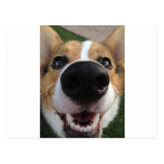 Carte Postale Collection de nez de chien de corgi de Gallois