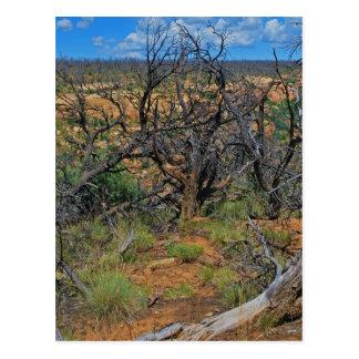 """Carte Postale Collection """"de parc national de MESA Verde"""""""