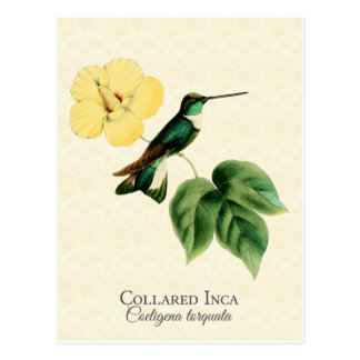Carte postale colletée d'art de colibri d'Inca