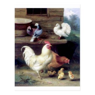 Carte Postale Colombes de poulet de poule de coq