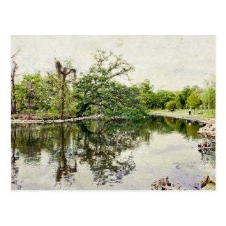 Carte Postale Colonie de freux de parc d'Audubon