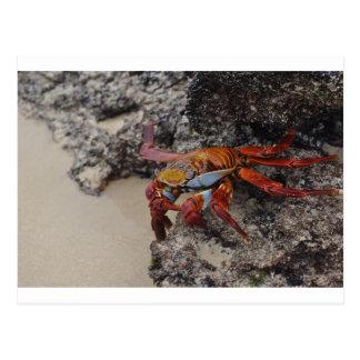 Carte postale colorée de crabe de Galapagos