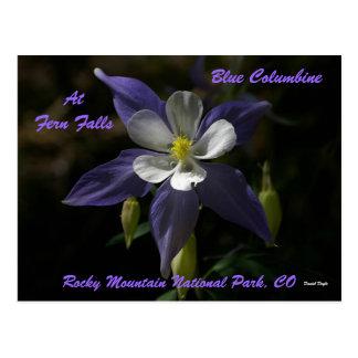 Carte Postale Columbine bleu aux automnes de fougère