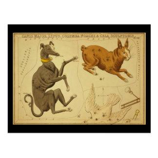 Carte Postale Commandant de Canis, Lepus, Columba Noachi Cela