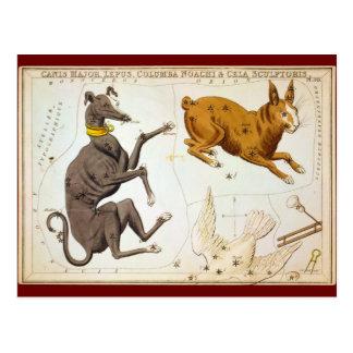 Carte Postale Commandant de Canis, Lepus, Columba Noachi et