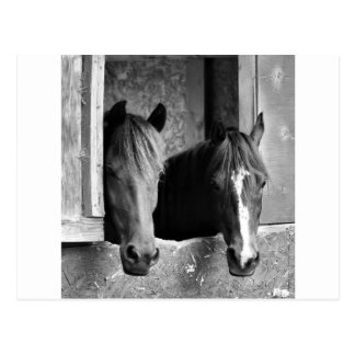 Carte Postale Compagnons stables
