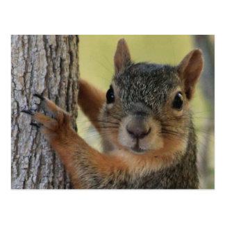 Carte postale comportant l'écureuil d'arbre