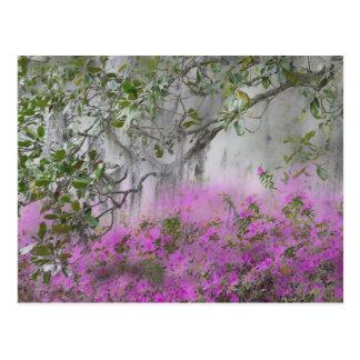 Carte Postale Composé de Digitals des azalées et de l'arbre de