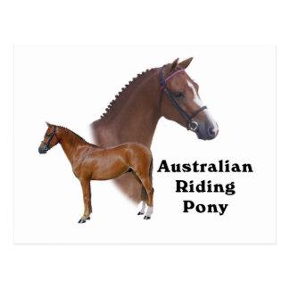 Carte Postale Conception australienne de poney