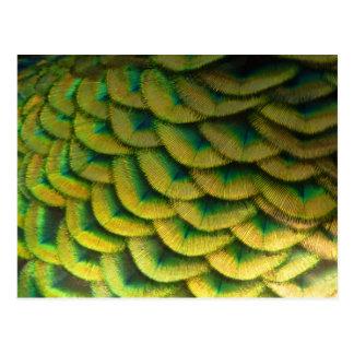 Carte Postale Conception colorée de nature des plumes II de paon