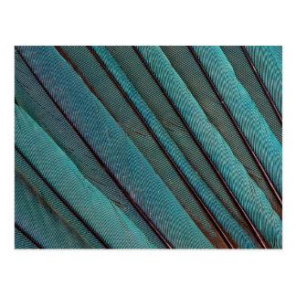 Carte Postale Conception de plume de martin-pêcheur de turquoise