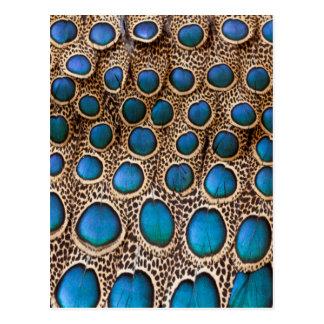 Carte Postale conception de plume de Paon-faisan