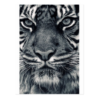 Carte Postale conception de tigre
