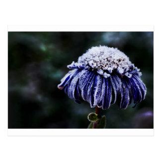 Carte postale congelée de fleur