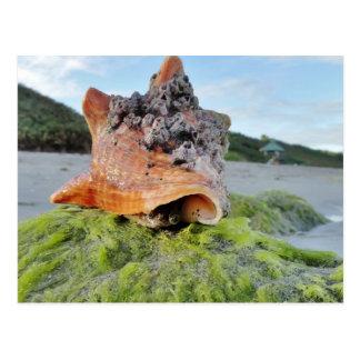 Carte Postale Conque Shell sur la plage