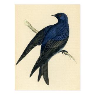 Carte Postale Copie antique de Martin pourpre