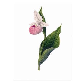 Carte Postale Copie antique d'orchidée
