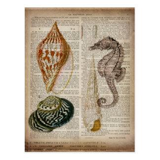 Carte Postale copie botanique de coquillage vintage français de