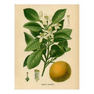 Carte Postale Copie botanique - orange douce