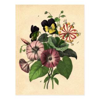 Carte Postale Copie botanique - pensée et chèvrefeuille