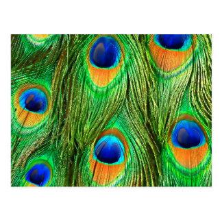 Carte Postale Copie colorée de plumes de paon