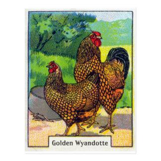 Carte Postale Copie vintage de poulet