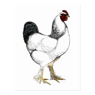 Carte Postale Coq léger de Brahma - poulet vintage élégant