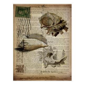 Carte Postale coquillage botanique français vintage moderne