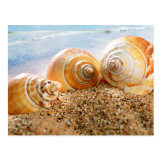 Carte Postale Coquillages sur la plage